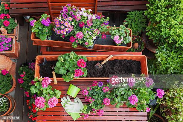 Gardening, different spring and summer flowers, flower box and gardening tools on garden table