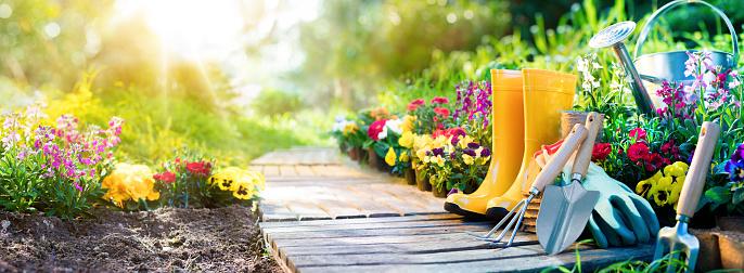 Gardening - Equipment Flowerbed In Sunny Garden 642945796