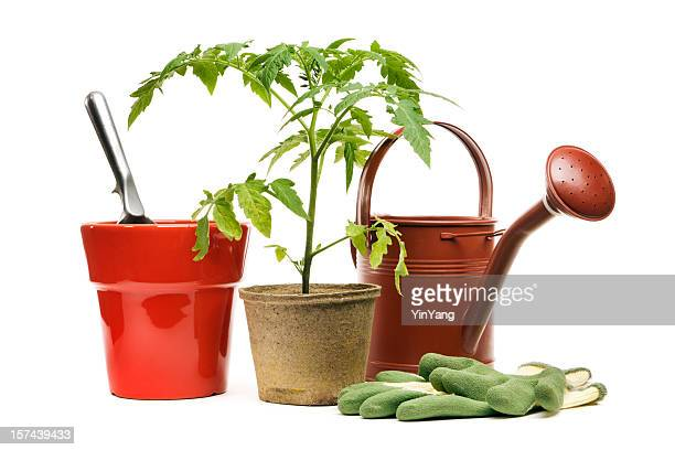 gardening equipment, potted plant, and flower pot, isolated on white - gardening equipment stock pictures, royalty-free photos & images