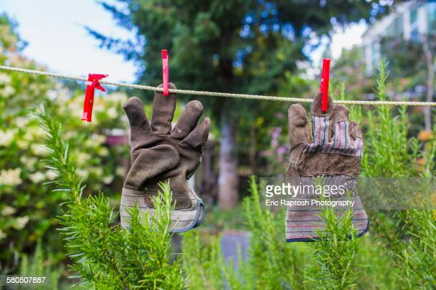 Gardening gloves drying on clothesline in backyard
