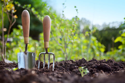 Gardening Hand Trowel and Fork Standing in Garden Soil 165831199