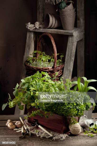 gardening in the country - barn setting with herbs, seedlings an - svetlana stock photos and pictures