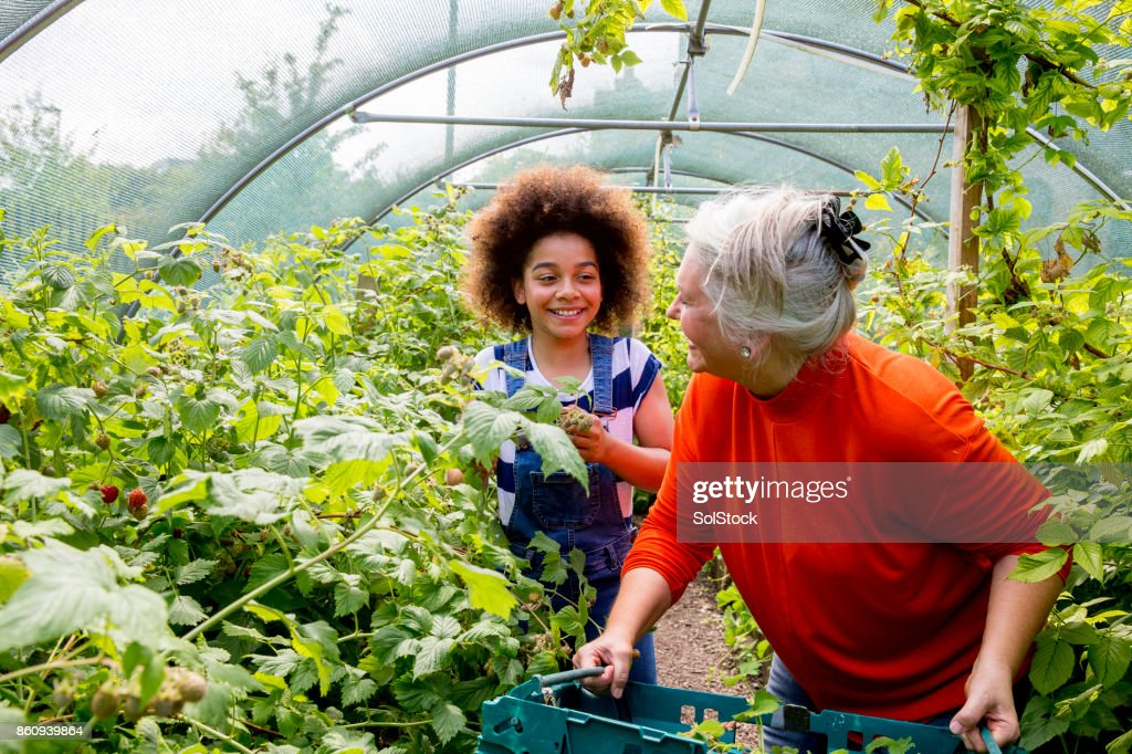 Gardening in the Greenhouse : Stock Photo