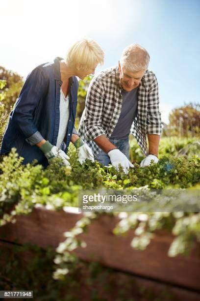 Tuinieren is een groot geschenk aan ons huwelijk