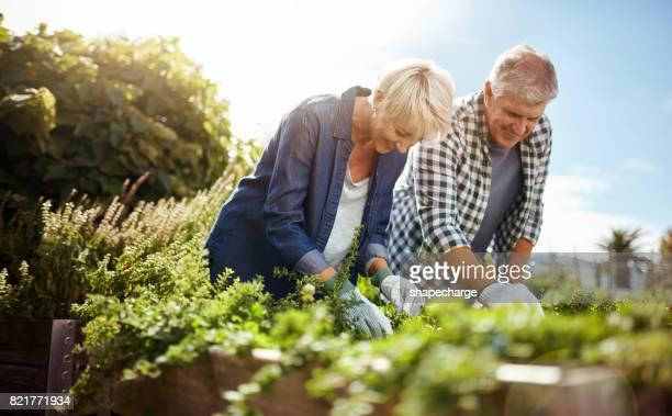 Tuinieren is de perfecte pensioen-hobby