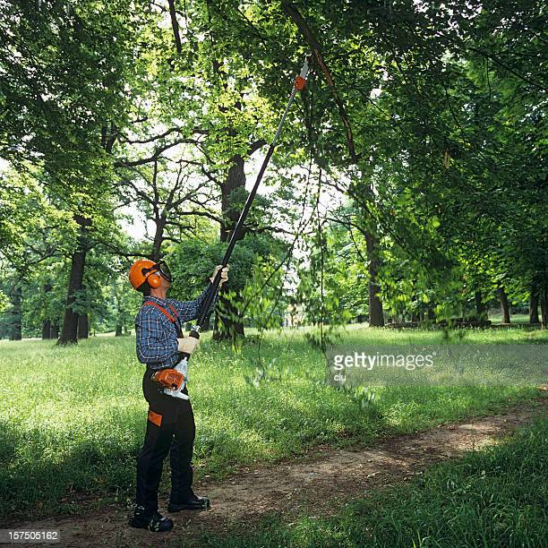 Gardening: man cutting the tree branches