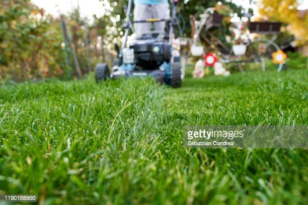 gardening mowing the lawn, grass, green, machine, mowed lawn - mulch stock pictures, royalty-free photos & images