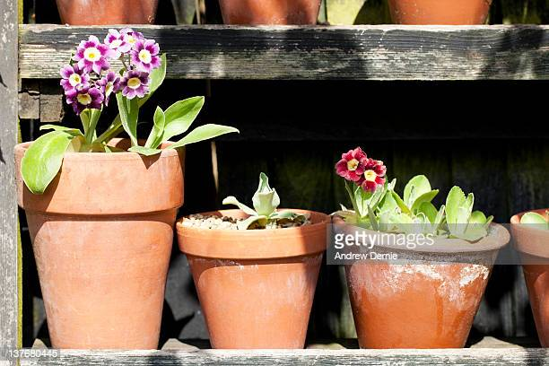 gardening - andrew dernie stock pictures, royalty-free photos & images