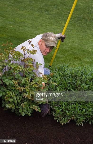 gardening - mulch stock pictures, royalty-free photos & images