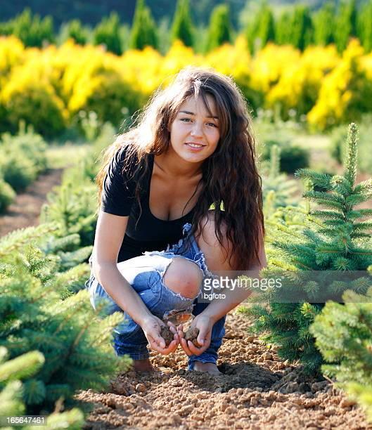gardening - barrväxter bildbanksfoton och bilder