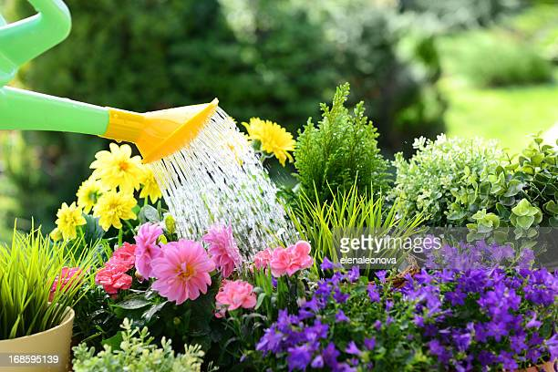gardening - watering stock pictures, royalty-free photos & images