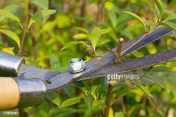 gardening - lutavia stock pictures, royalty-free photos & images