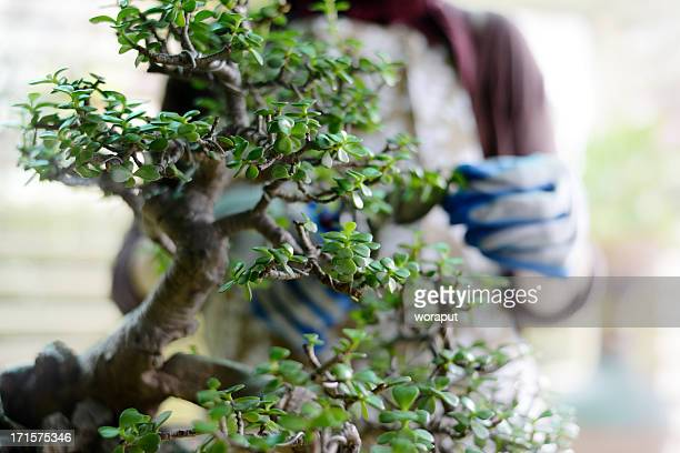 gardening - bonsai tree stock pictures, royalty-free photos & images