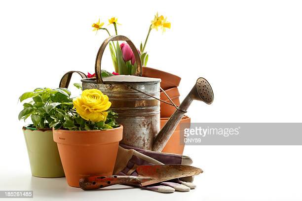gardening - pot plant stock pictures, royalty-free photos & images