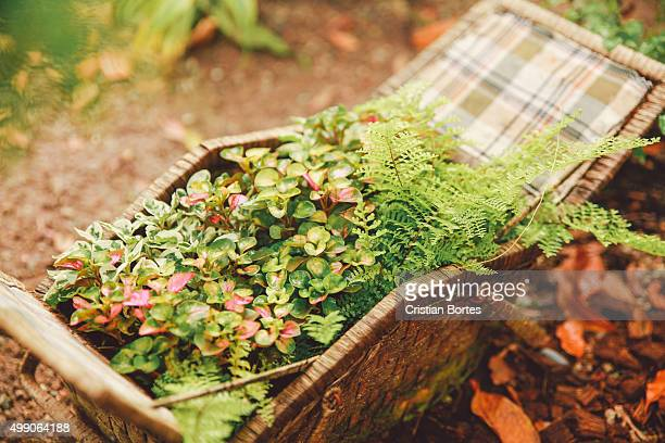 gardening - bortes stock pictures, royalty-free photos & images