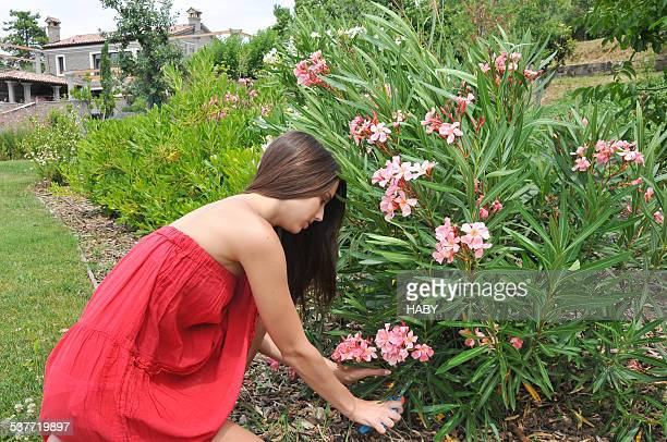 Oleander fotograf as e im genes de stock getty images for Imagenes de jardineria