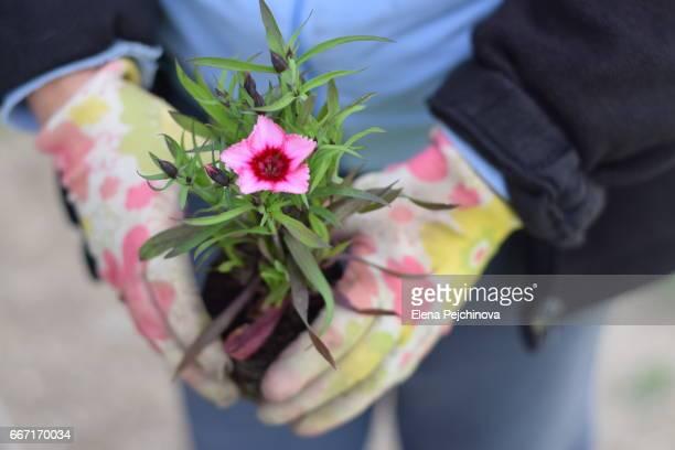 gardening - elena blume stock-fotos und bilder