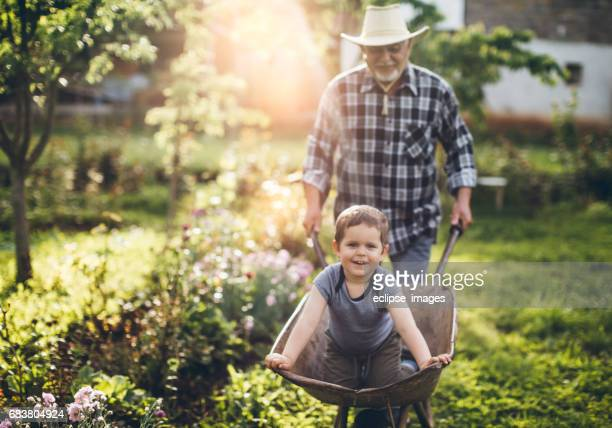 gardening - wheelbarrow stock photos and pictures