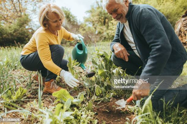 gardening together - simple living stock pictures, royalty-free photos & images