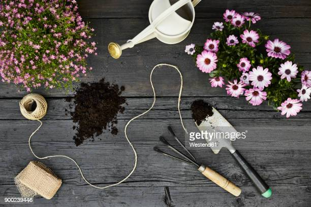 Gardening tools and blooming plants on dark wood