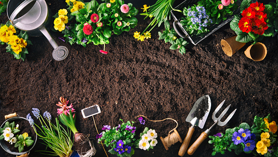 Gardening tools and flowers on soil 1134719594