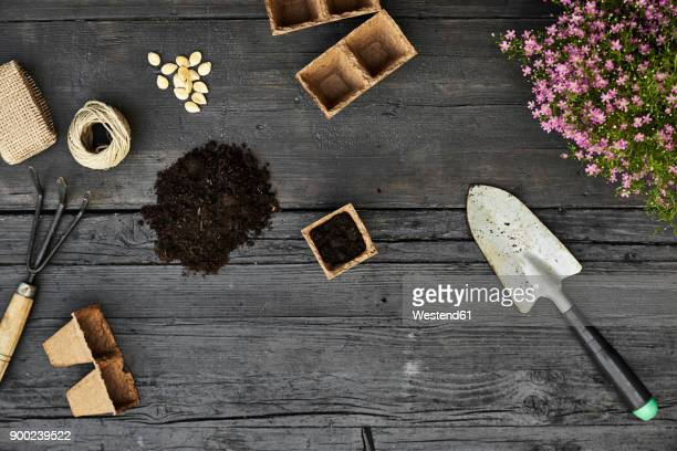 gardening tools, seeds and blooming plants on dark wood - gardening equipment stock pictures, royalty-free photos & images