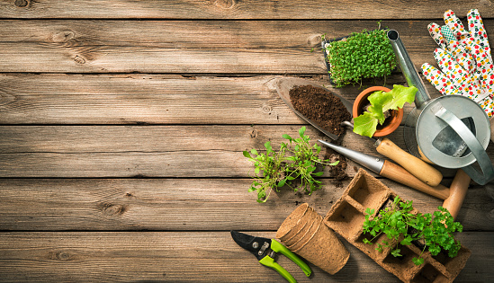 Gardening tools, seeds and soil on wooden table 673641858
