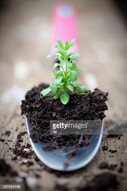 gardening trowel holding seedling plant - potting stock pictures, royalty-free photos & images