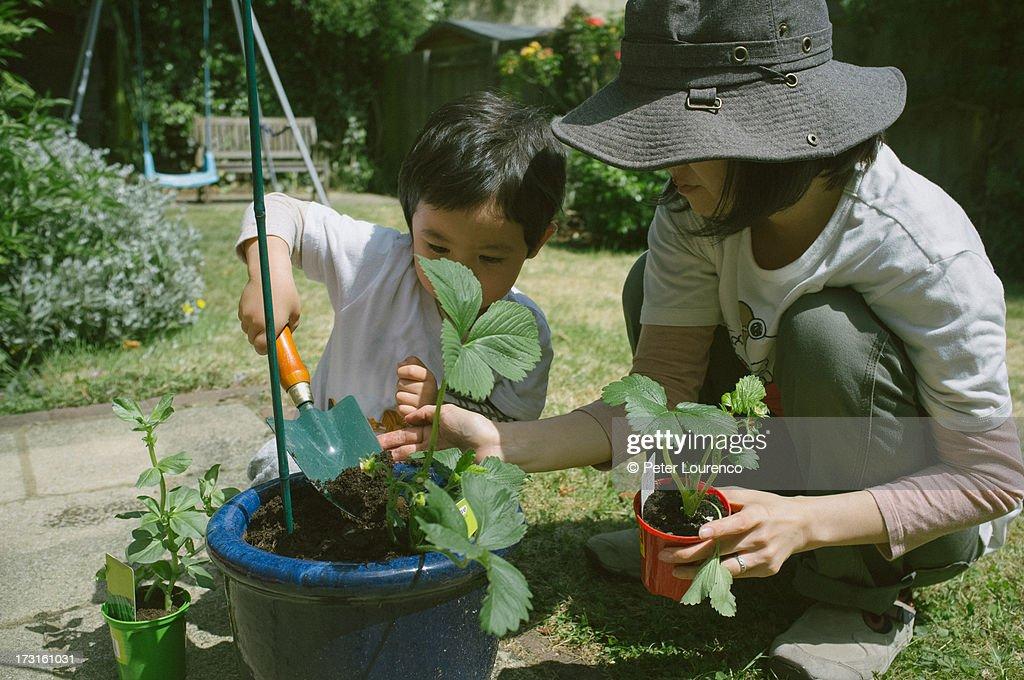Gardening with mum : Stockfoto