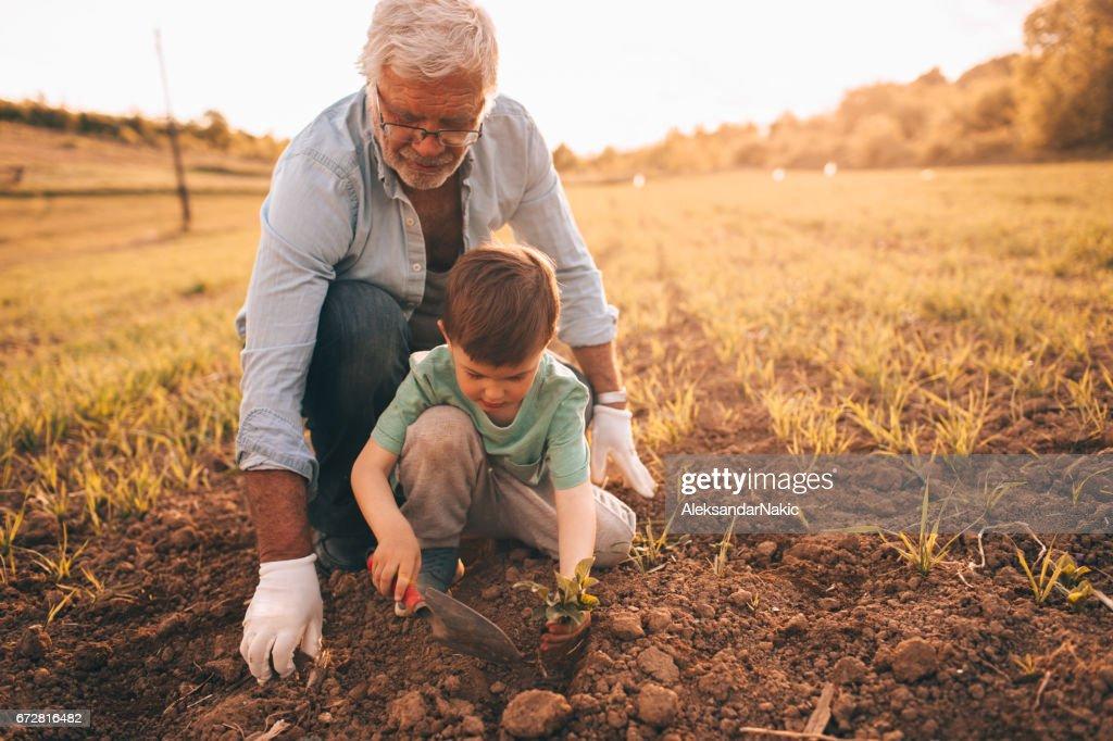 Gardening with my grandson : Stock Photo
