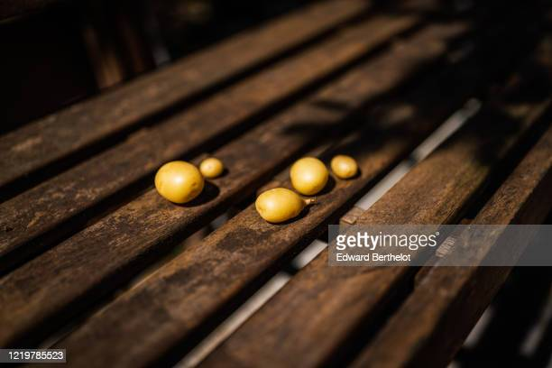 gardening - young potatoes on a wooden bench - edward berthelot photos et images de collection