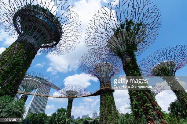 Gardens by the Bay and Marina Bay Sands in Singapore