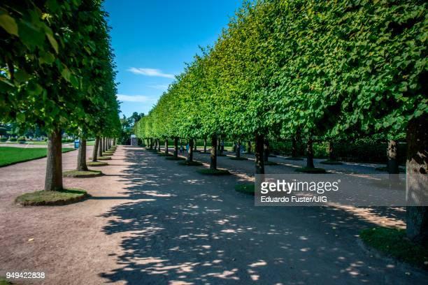 gardens in peterhof palace, saint petersburg, russia - gran palacio peterhof fotografías e imágenes de stock