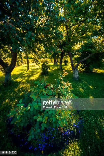 gardens in peterhof palace, saint petersburg, russia - groot paleis peterhof stockfoto's en -beelden