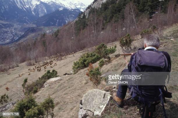 Gardien du parc de la Vanoise tirant sur les bouquetins pour les endormir en Savoie en France le 24 avril 1989