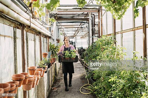 Gardner carrying plants in crate at greenhouse