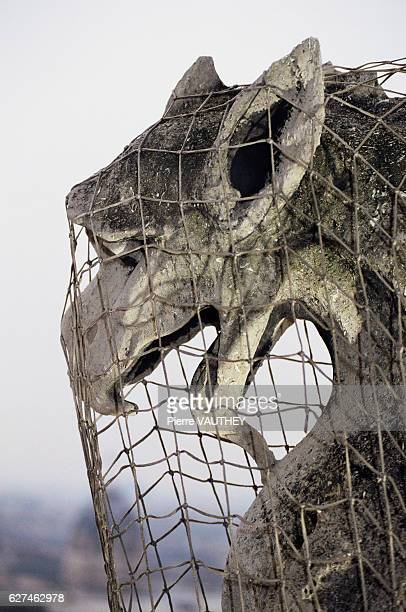 A gargoyle on Notre Dame Cathedral in Paris is covered with a protective net Beginning in 1991 the cathedral underwent a tenyear restoration project...