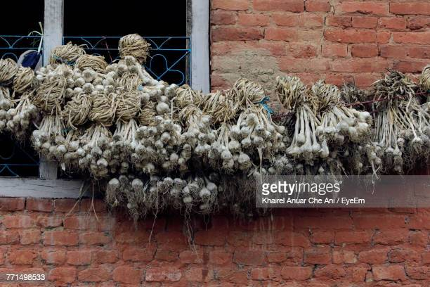 garlic cloves hanging against brick wall - frische stockfoto's en -beelden