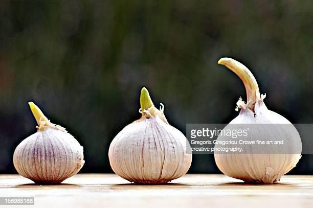 garlic - gregoria gregoriou crowe fine art and creative photography stock-fotos und bilder