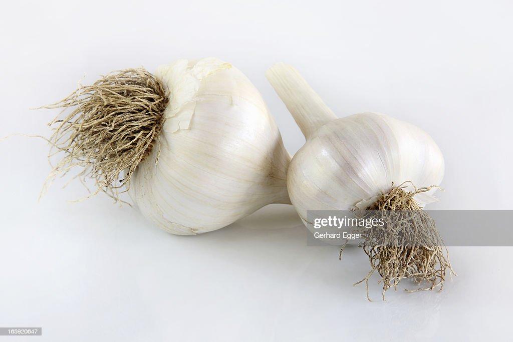 Garlic : Stock Photo