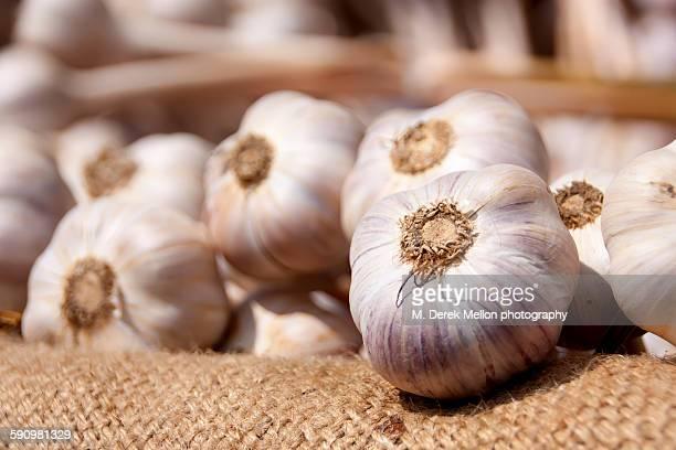 garlic - cabeza de ajos fotografías e imágenes de stock