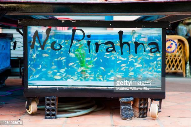 Garra Ruufa fish in a fish massage container, Siem Reap, Cambodia, Southeast Asia, Asia, Southeast Asia.