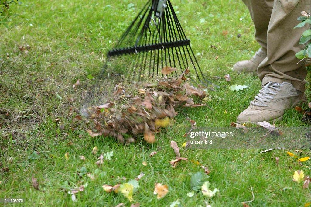 Gartenpflege  Gartenpflege im Herbst. Entfernen von Laub vom Rasen im Garten mit ...