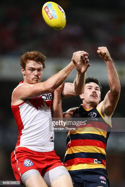 Gary Rohan of the Swans contests the ball Mitch McGovern of the Crows during the round five AFL match between the Sydney Swans and the Adelaide Crows...