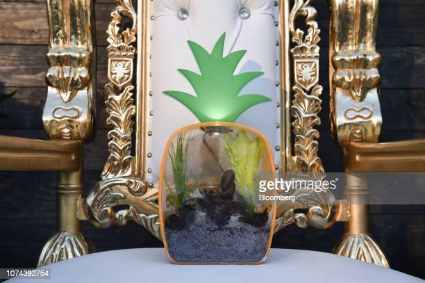 Gary the pet snail sits on a throne at an unveiling event for the Boring Co. Hawthorne test tunnel in Hawthorne, California, U.S., on Tuesday, Dec....