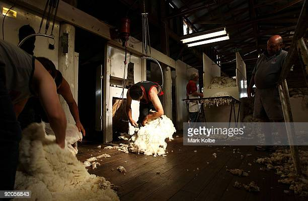Gary Valenaus shears a sheep during spring shearing at Cherry Hill Pastoral Company property on October 19, 2009 in Uralla, Australia. Shearing in...