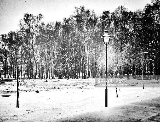 gas light on snow covered field by trees against sky - ガス燈 ストックフォトと画像