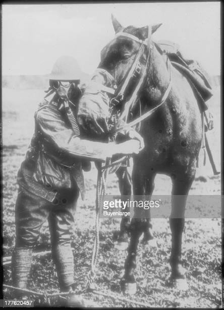 Gas masks for man and horse demonstrated by American soldier France 1918