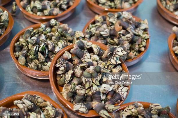 Gastronomic celebrations of the 'percebe' (barnacles) in Galicia