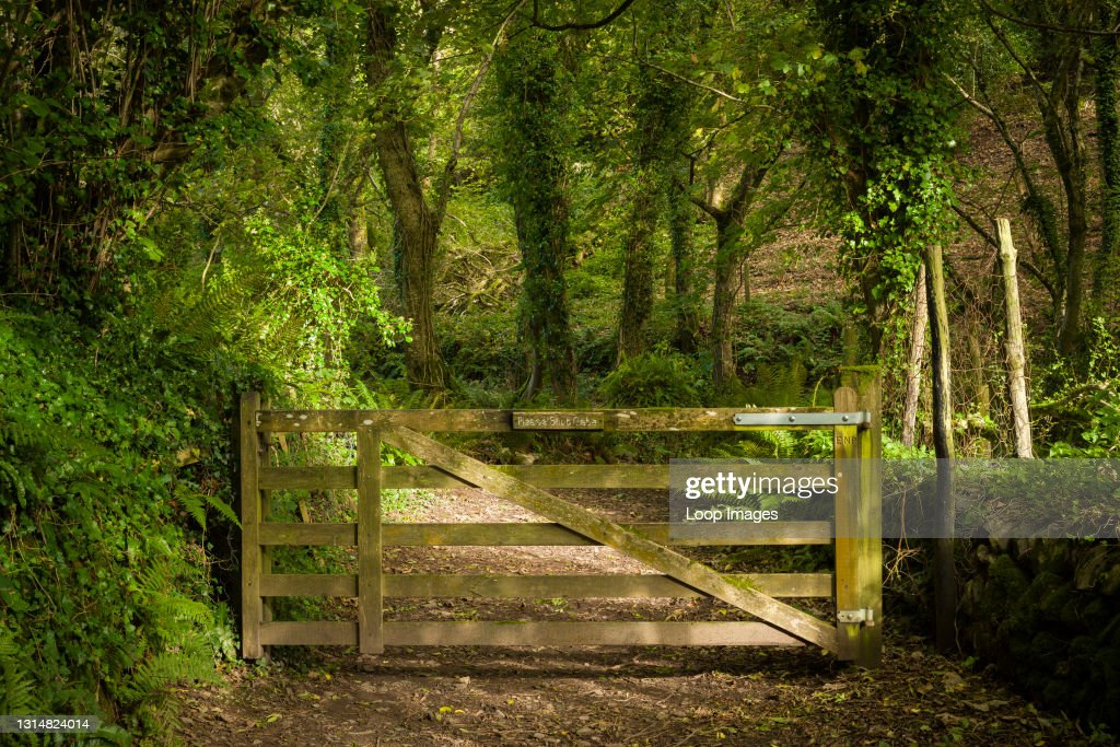 A gate at the entrance to Worthy Wood near Porlock Weir in the Exmoor National Park : News Photo